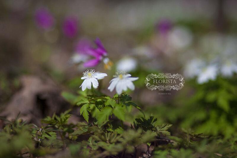 Сон цветы цветущие