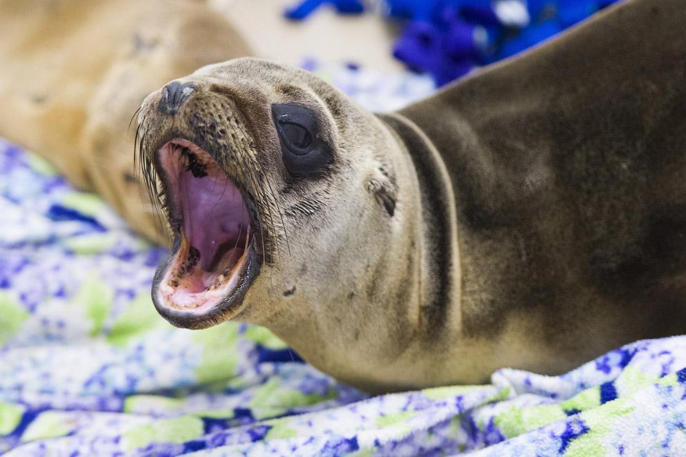 5. Более 1 450 морских львов уже были спасены с января этого года. Это в 5 раз больше, чем, н