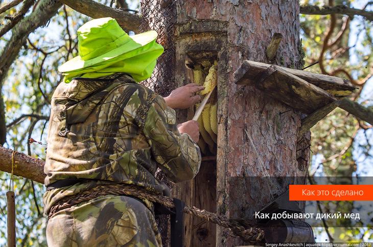 Фотографии и текст Сергея Анашкевича   1. Башкирия, медовый край... Пасек здесь так много,