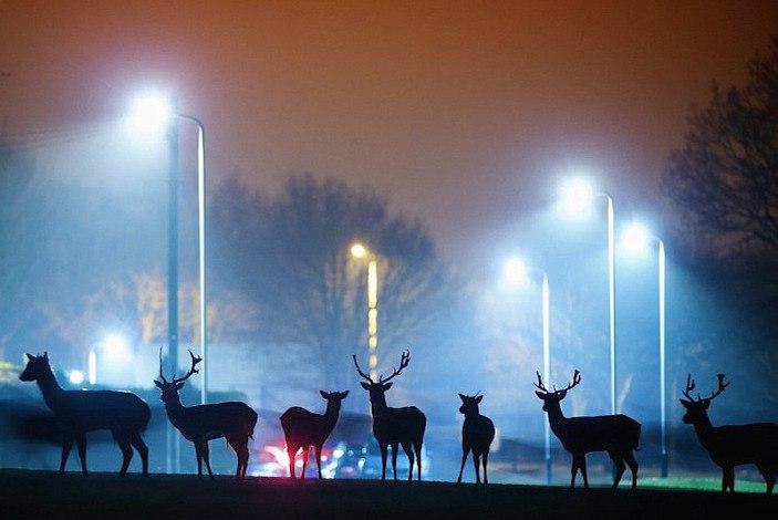 """Фотопроект """"Животные на улицах городе"""". Фотограф Mark Smith и Mark Bridger (6 фото)"""