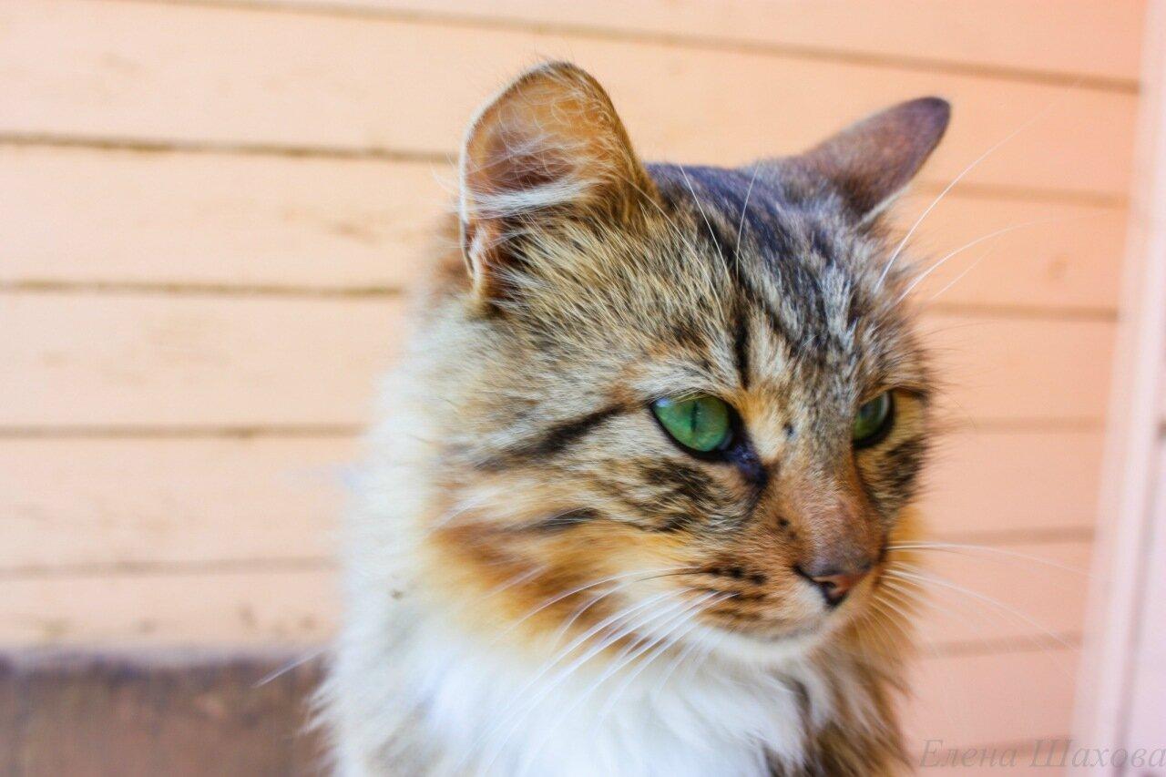 Кошка-4.jpg