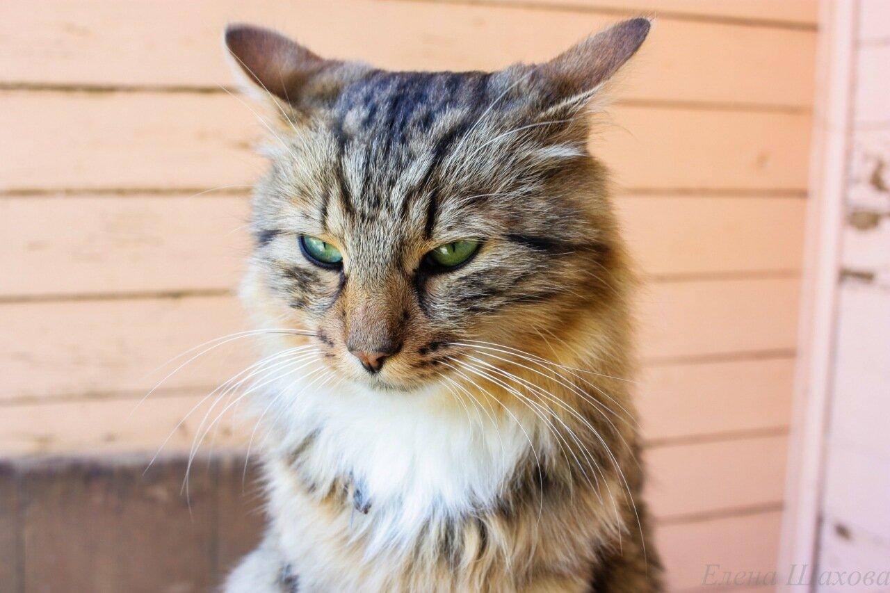 Кошка-6.jpg