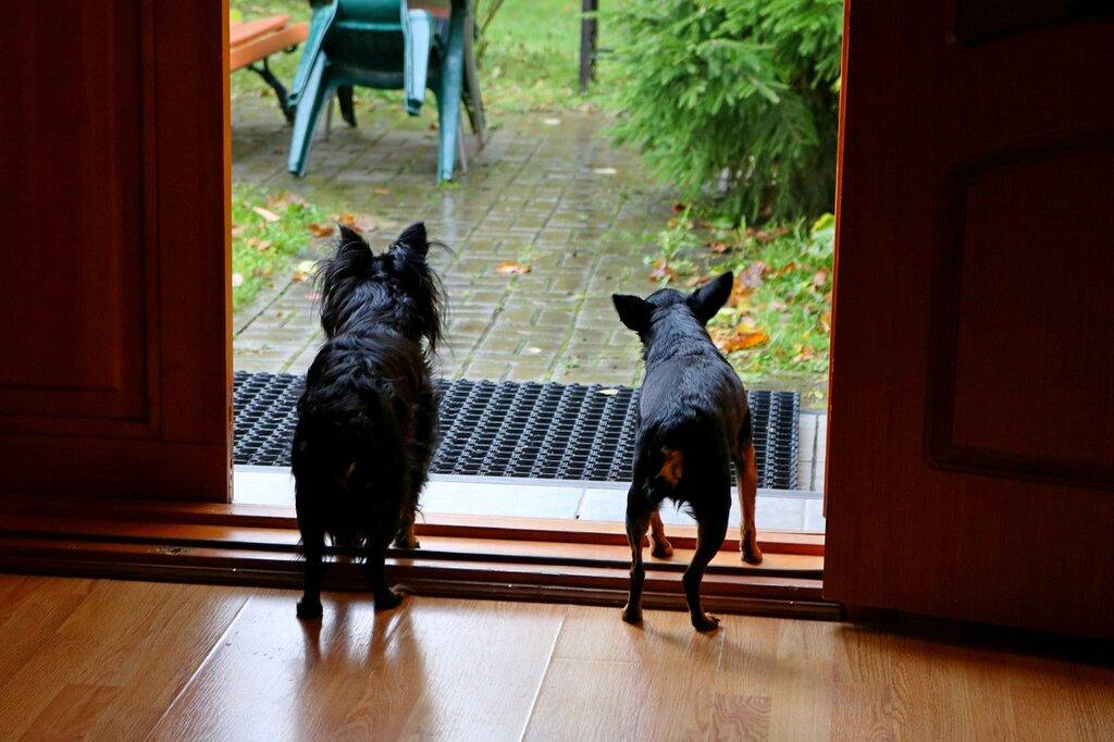 Собачья жизнь в Завидово