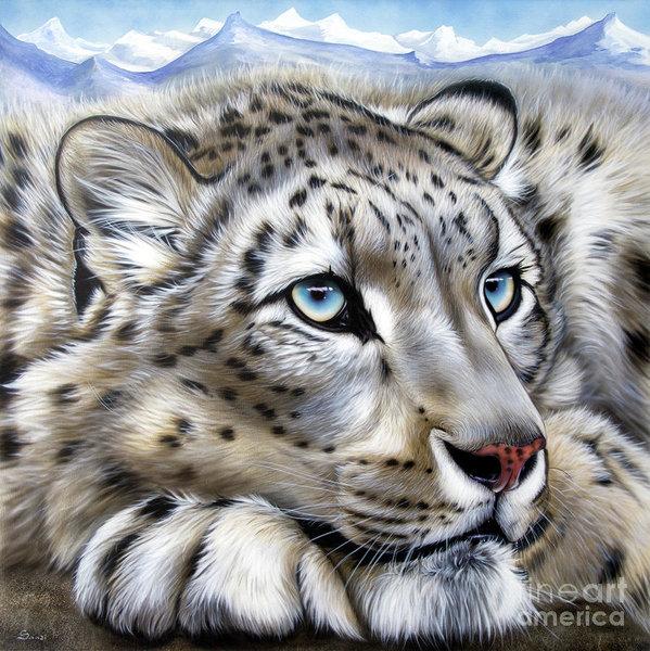 snow-leopards-dream-sandi-baker.jpg