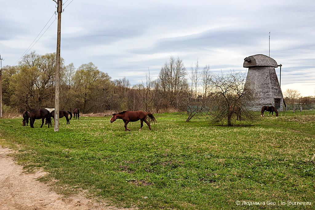 кони в великом новгороде