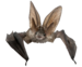 bat_PNG46.png