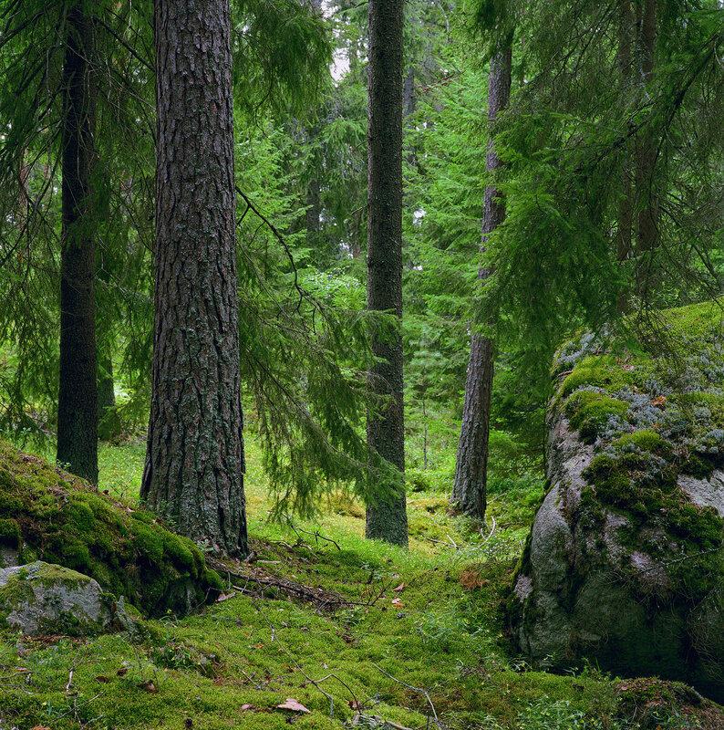 Высотомеры лесные картинки