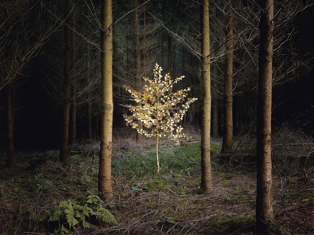 Британский лес на снимках Элли Дэвис