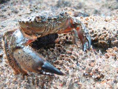 День Черного моря. Крабик на песке