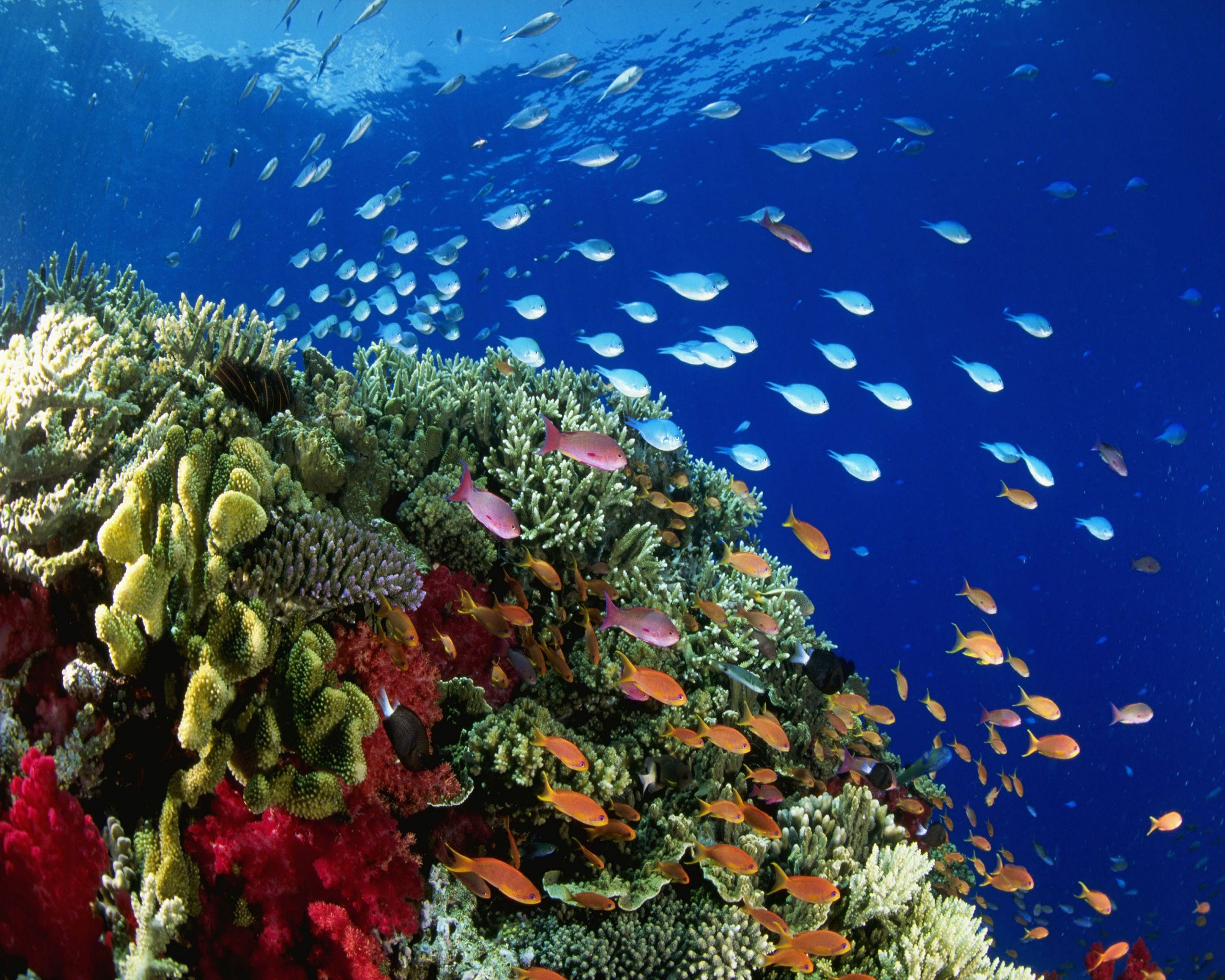 Marine Life at Great Barrier Reef