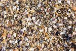 441 Песок из ракушек