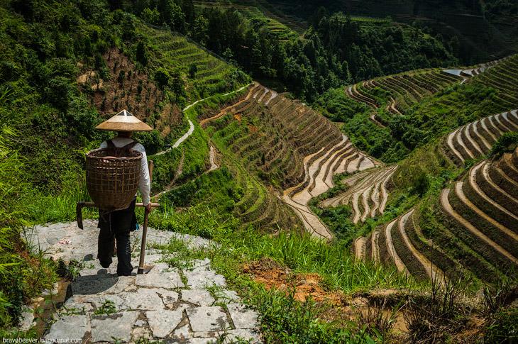 Рисовые террасы в Лонгшень (27 фото)