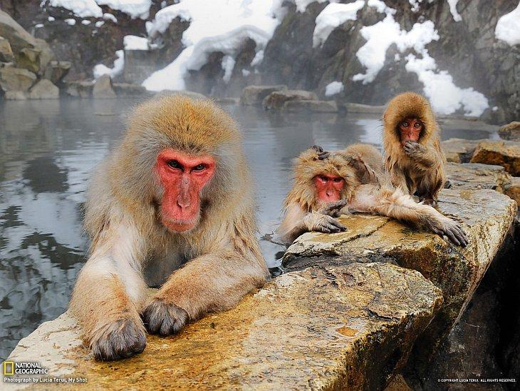 National Geographic: лучшие фотографии июля (25 фото)