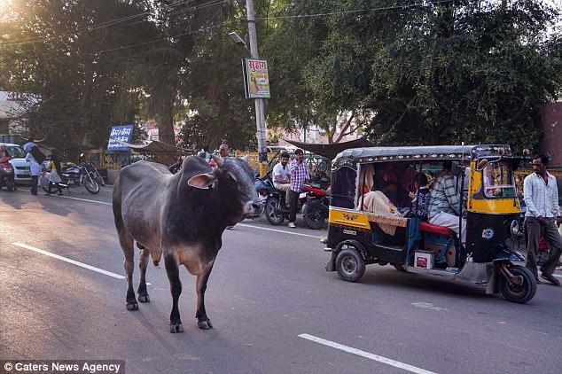 В прошлом году во время путешествия в Индию Джек стоял на улице и спорил с водителем тук-тука, котор