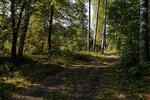Тихо ложится осень листьями на пути...