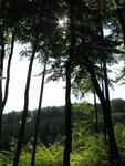 0 лес.JPG