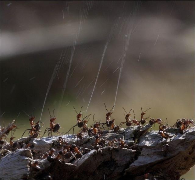 Brood war. Муравьи против термитов.