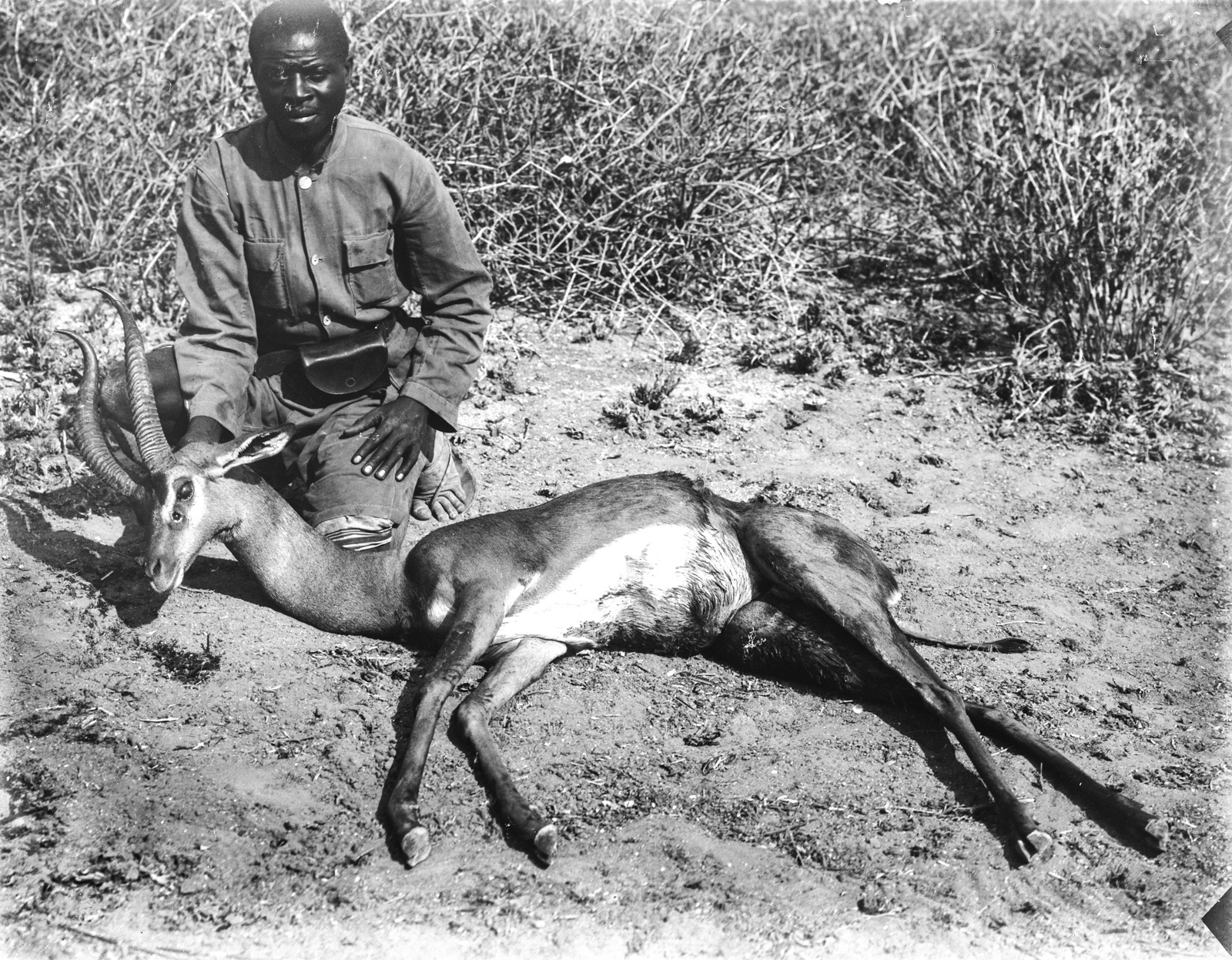 133. Убитая газель