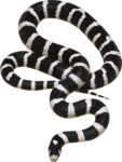 snake_PNG4054.png