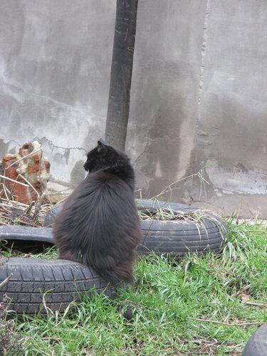 Кошка на круге
