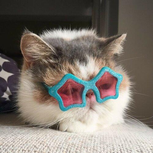 Буона – кошка из Японии  фото