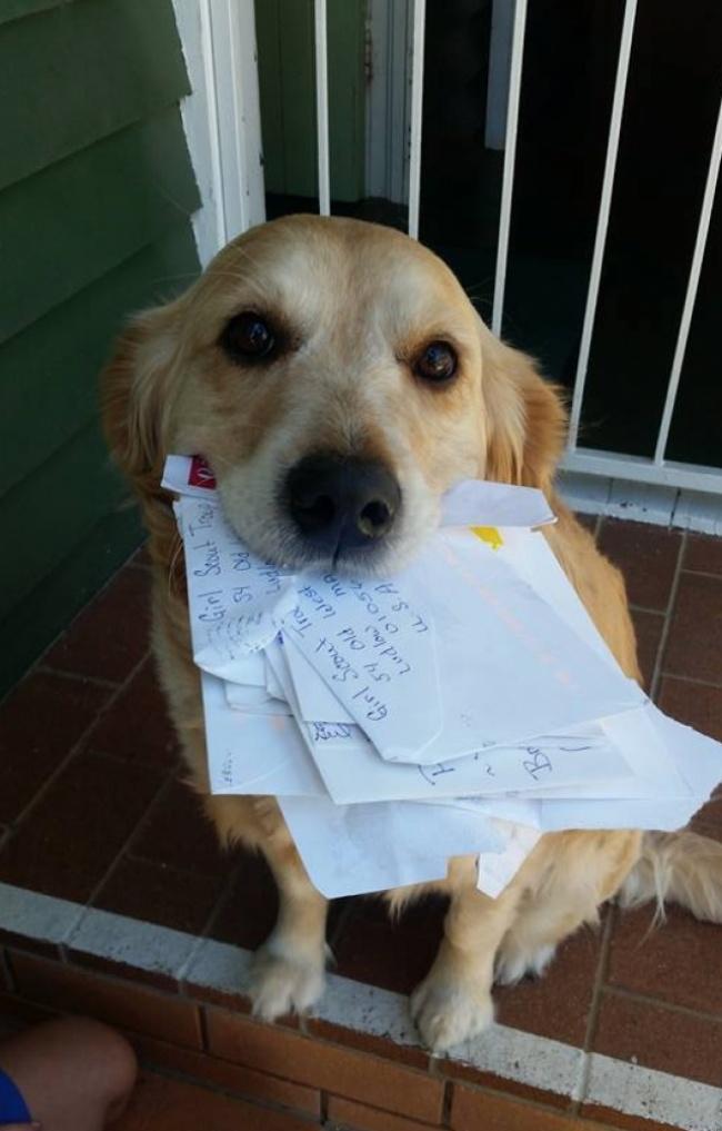 © Martin Studer/facebook.com     Эту собаку зовут Пиппа, она живет вБрисбене ио