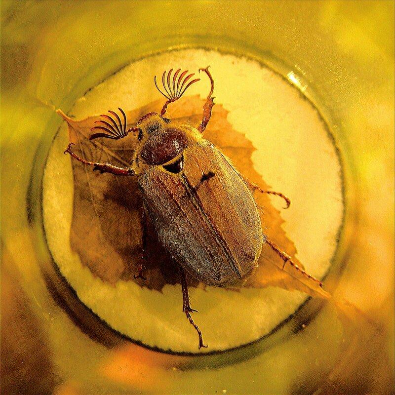насекомое под лупой