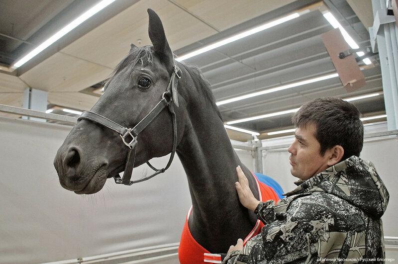 ВДНХ. Золотая осень. кони. 03.10.17.06..jpg