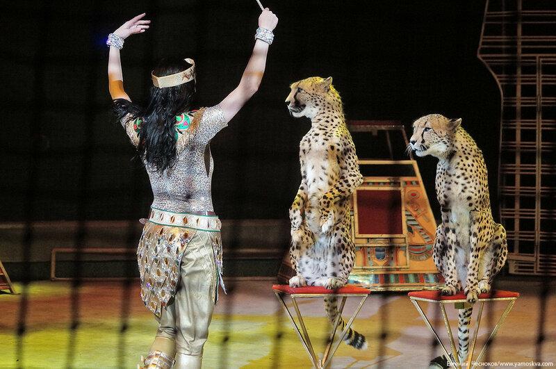 Цирк Дарьи Костюк. Вегас. 15.10.17.66..jpg