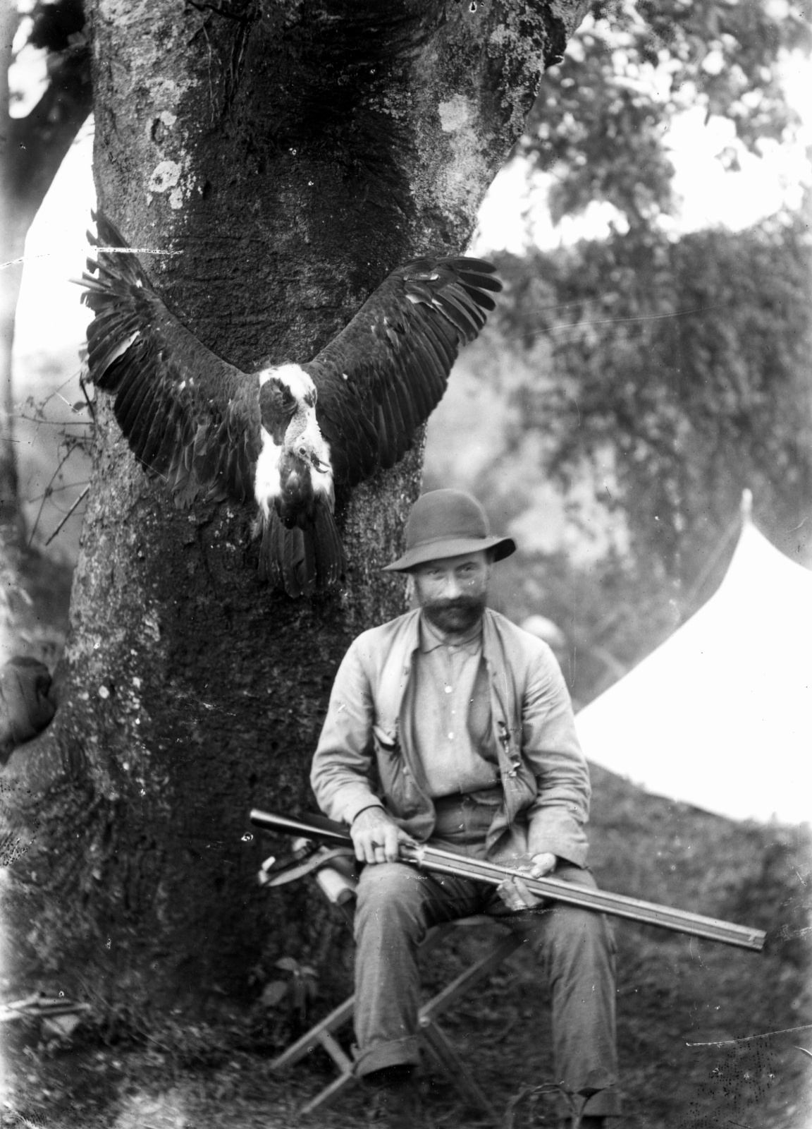 385. Людвиг Пуртшеллер позирует на складном стуле перед деревом, за ним убитый стервятник
