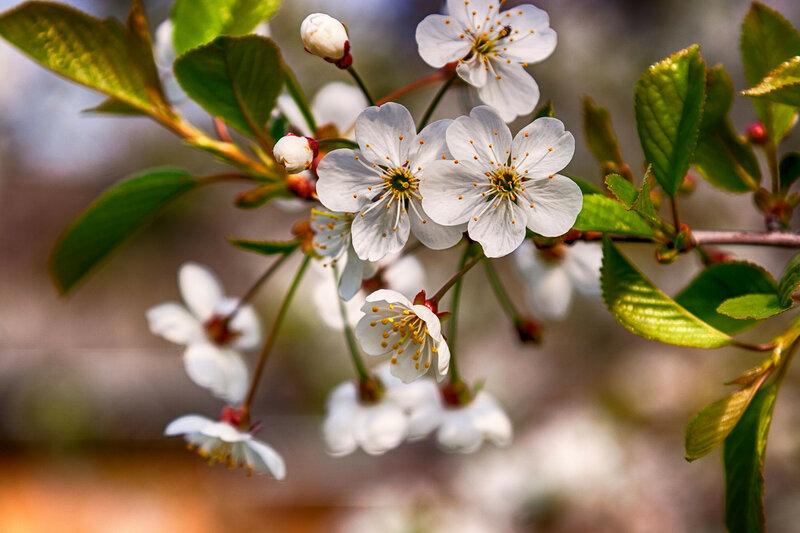 Весна на даче.