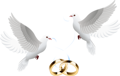 голуби с обручальными кольцами
