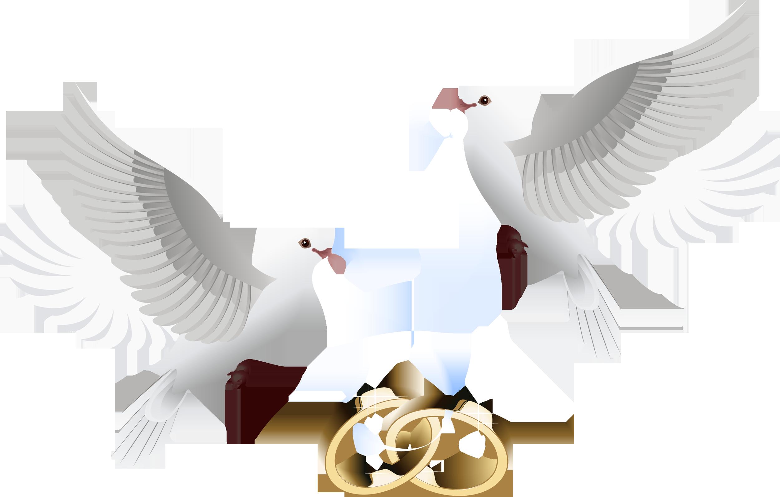 картинки свадебные кольца и голуби