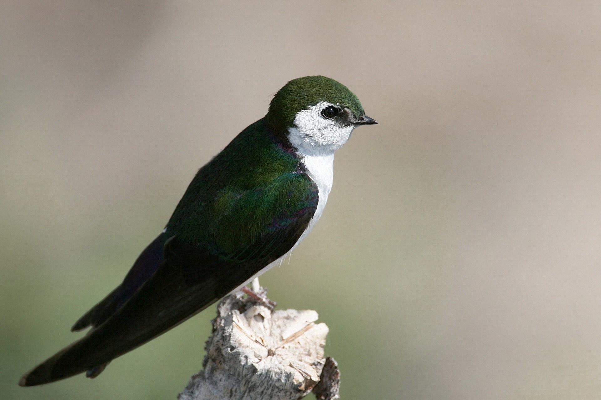 Мініатюрна пташка