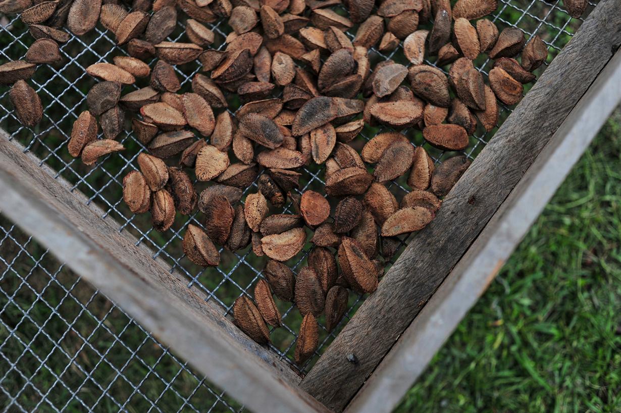 Пожалуй, самым вкусным продуктом из нашего списка является бразильский орех. Он помогает ускорит