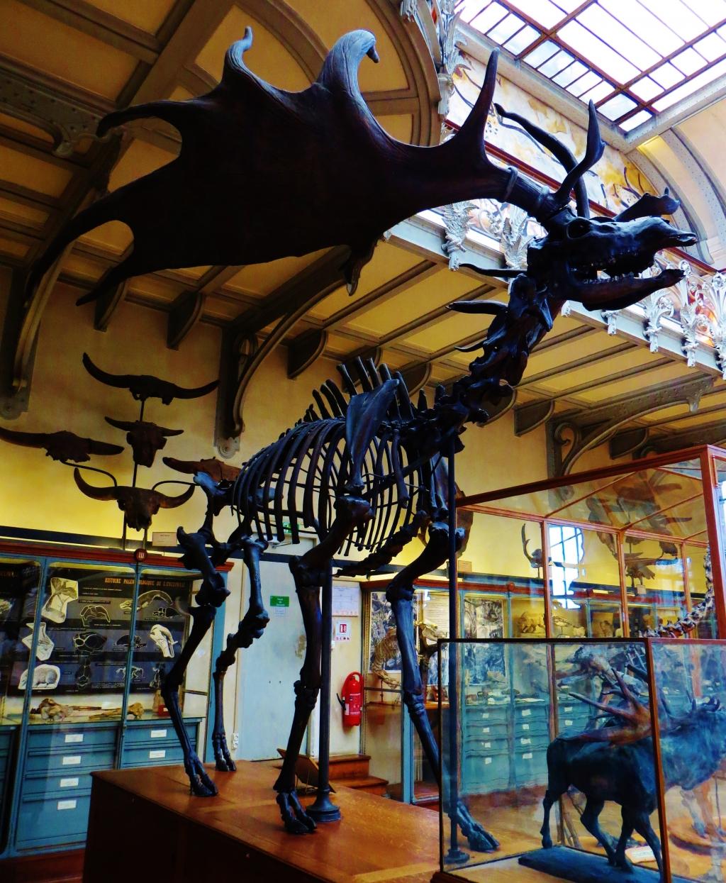 Кости древнего большерогого оленя найдены наСтаврополье