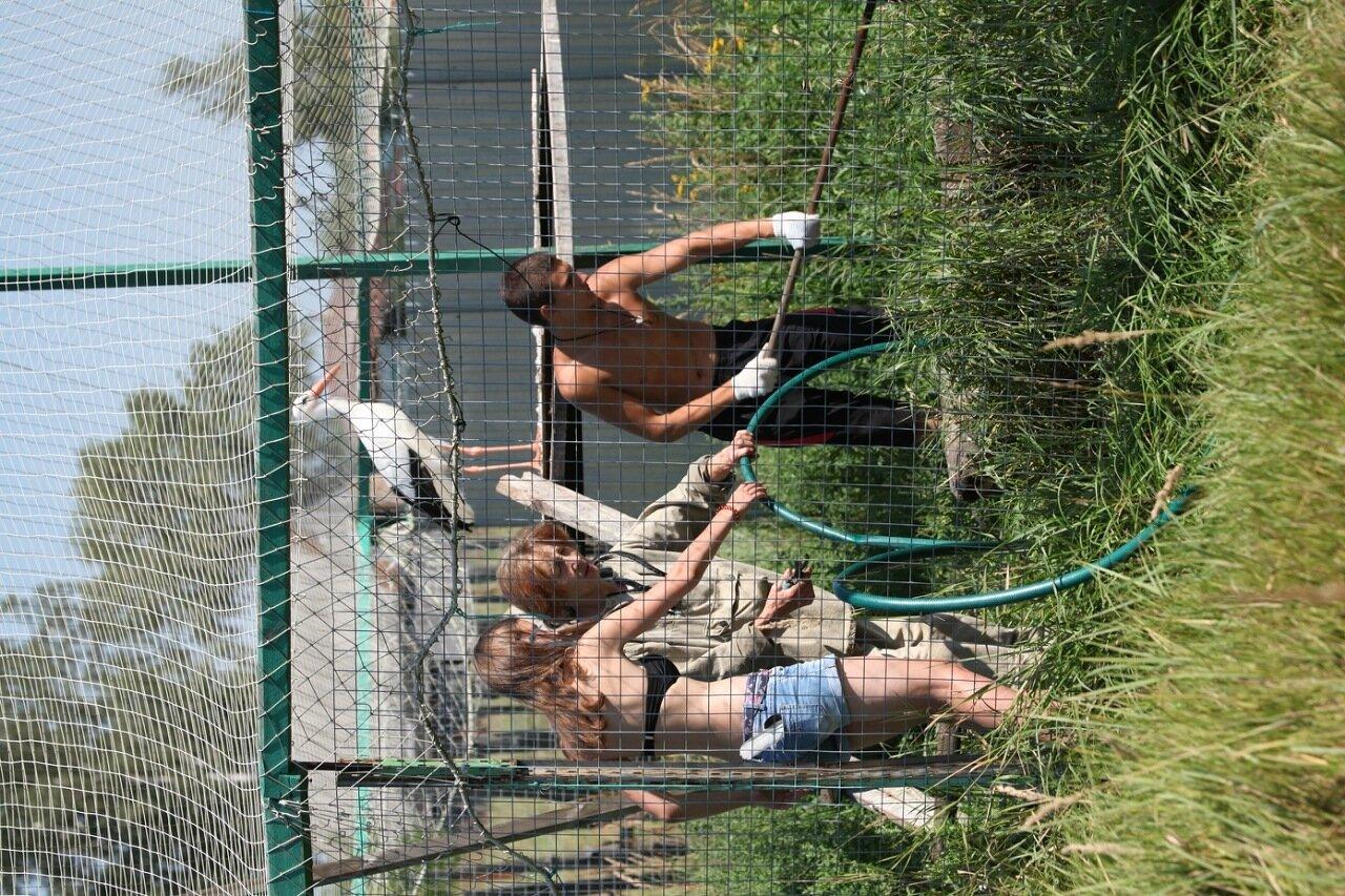 Реабилитационный центр Птицы без границ, деревня Папушево