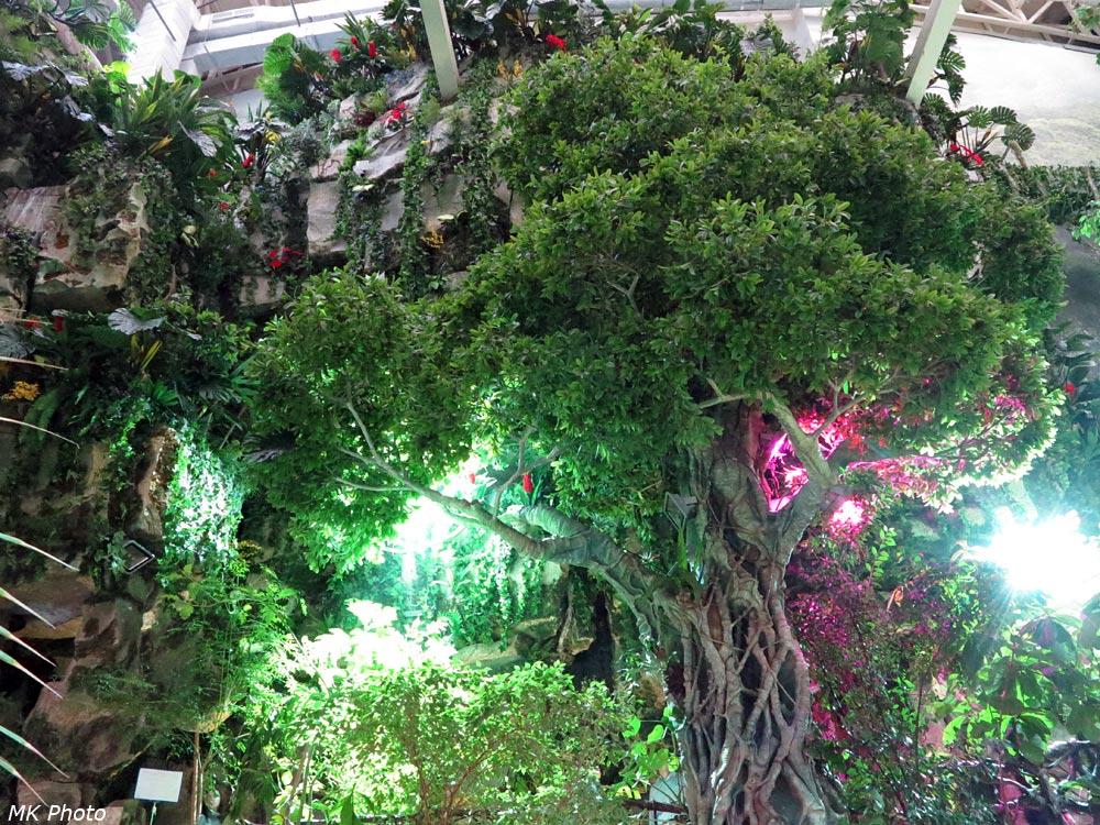 Дождевой тропический лес