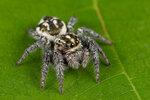 Паукообразные (Arachnida)
