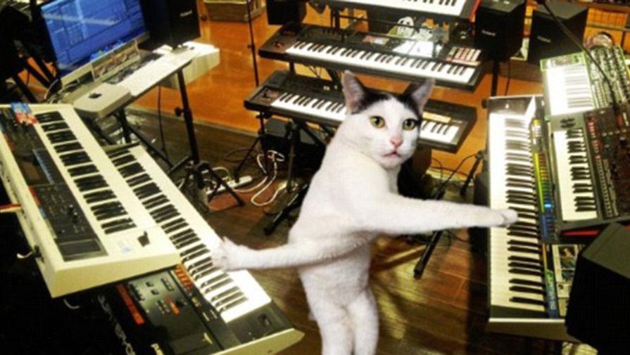 не определившийся кот