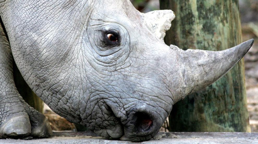 20. Орлиный глаз... (Фото Marcelo del Pozo | Reuters):