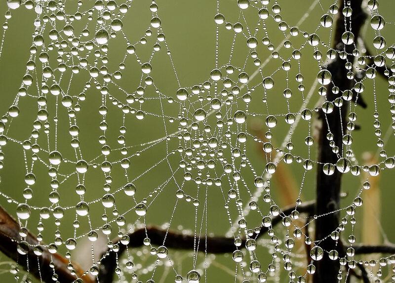 Ожерелье для паука