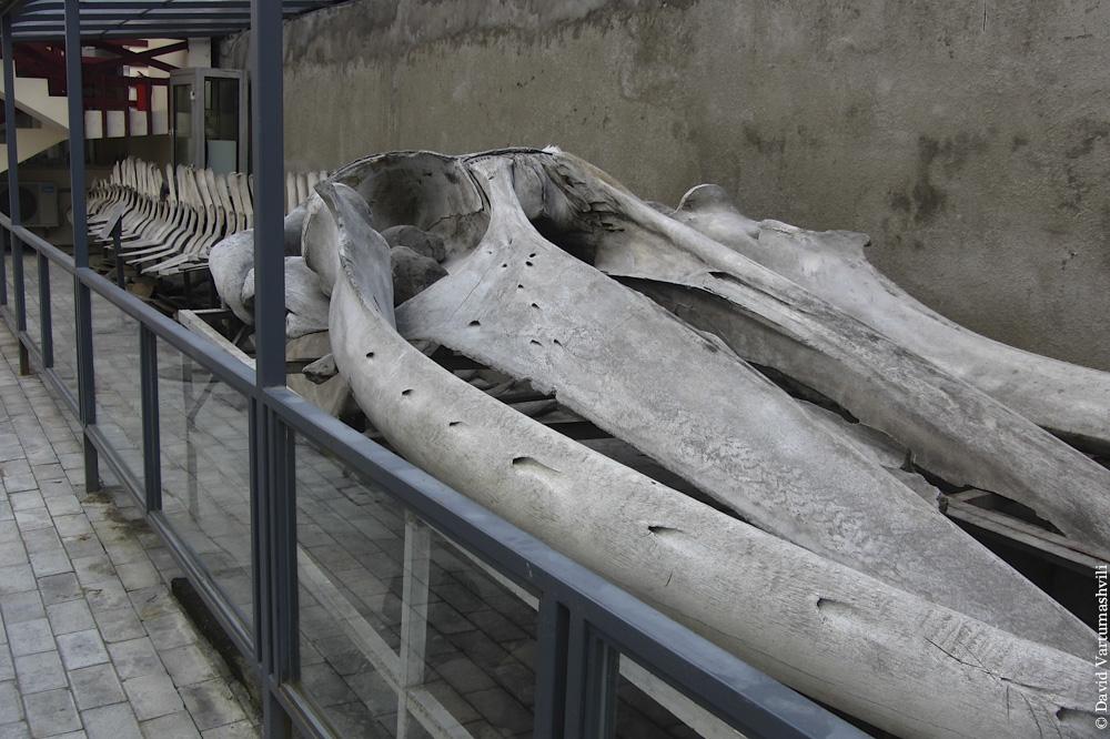 Батумский краеведческий музей