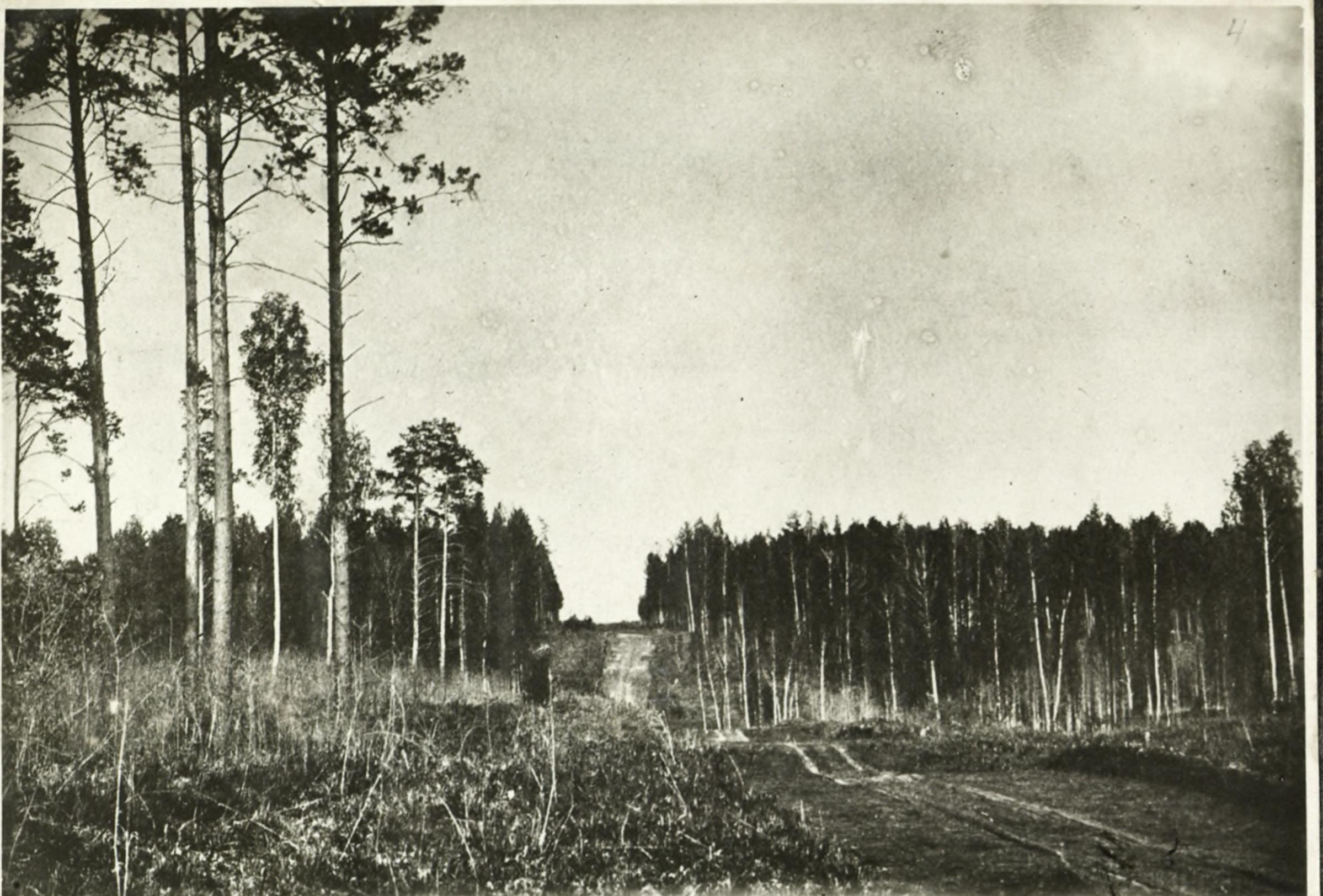 Бор, на месте которого в 1895 существовала Старо-Базарная площадь