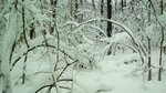 Будыкин Павел (рук. Пригорнева Татьяна Александровна) — Мелодия зимнего леса