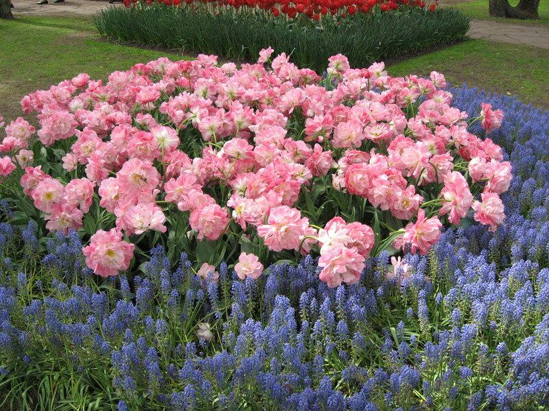 Розовое с голубым