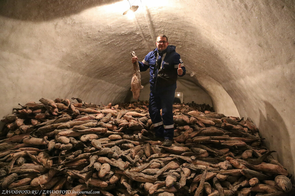 Сколько рыбы выловили в России в 2019 году РЫБОПЕРЕРАБАТЫВАЮЩАЯ,ПИЩЕВАЯ