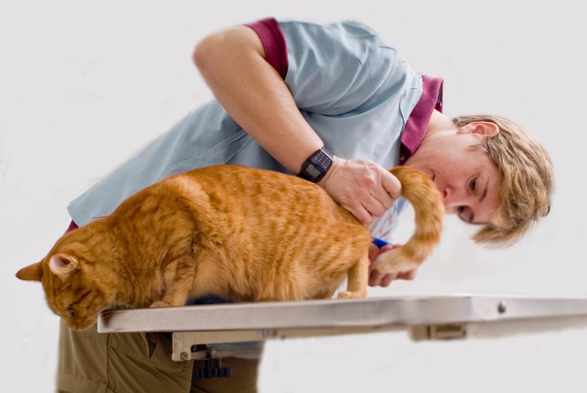 Разновидности цистита у кошек