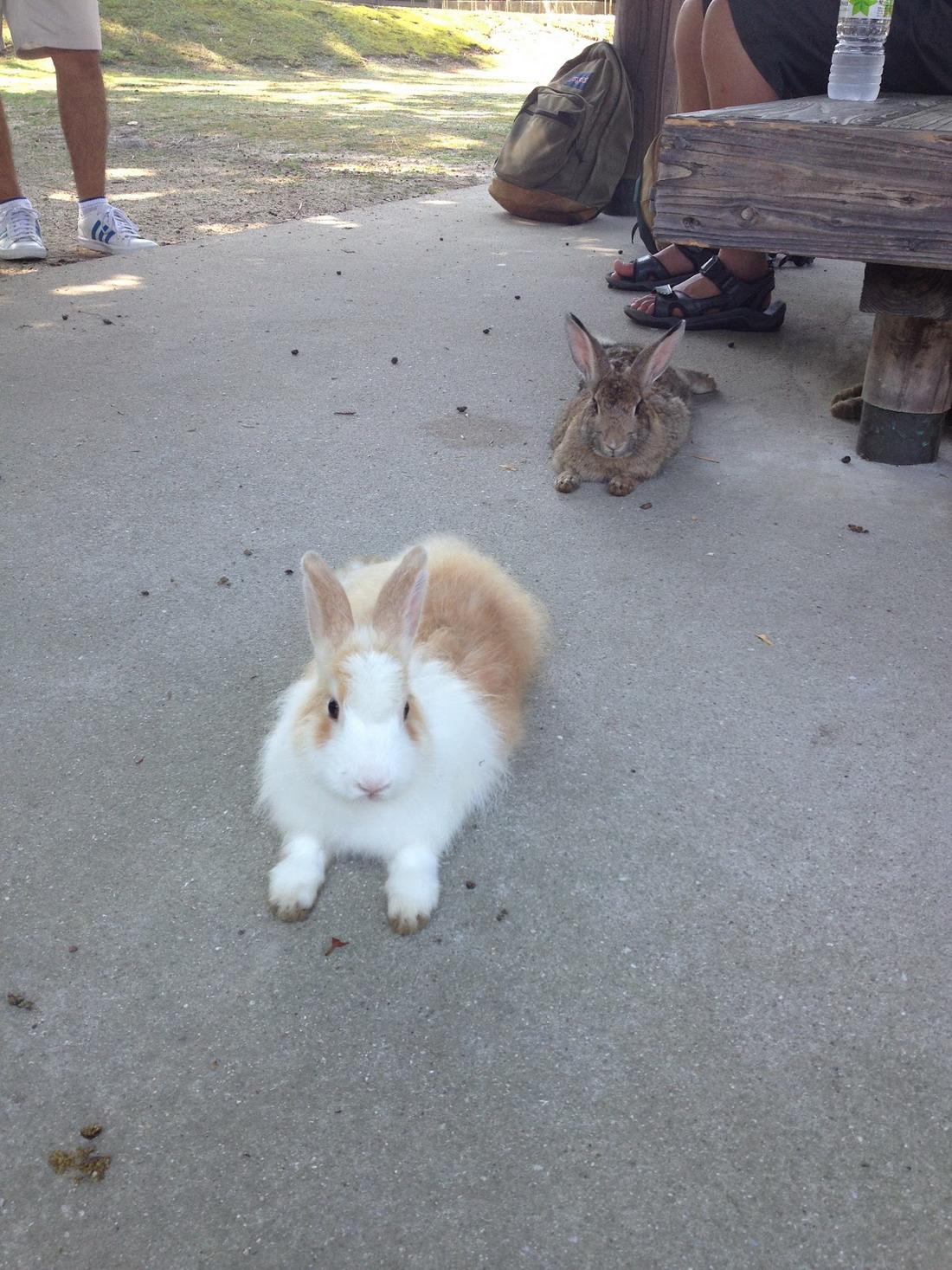 Okunoshima - Остров кроликов в Японии
