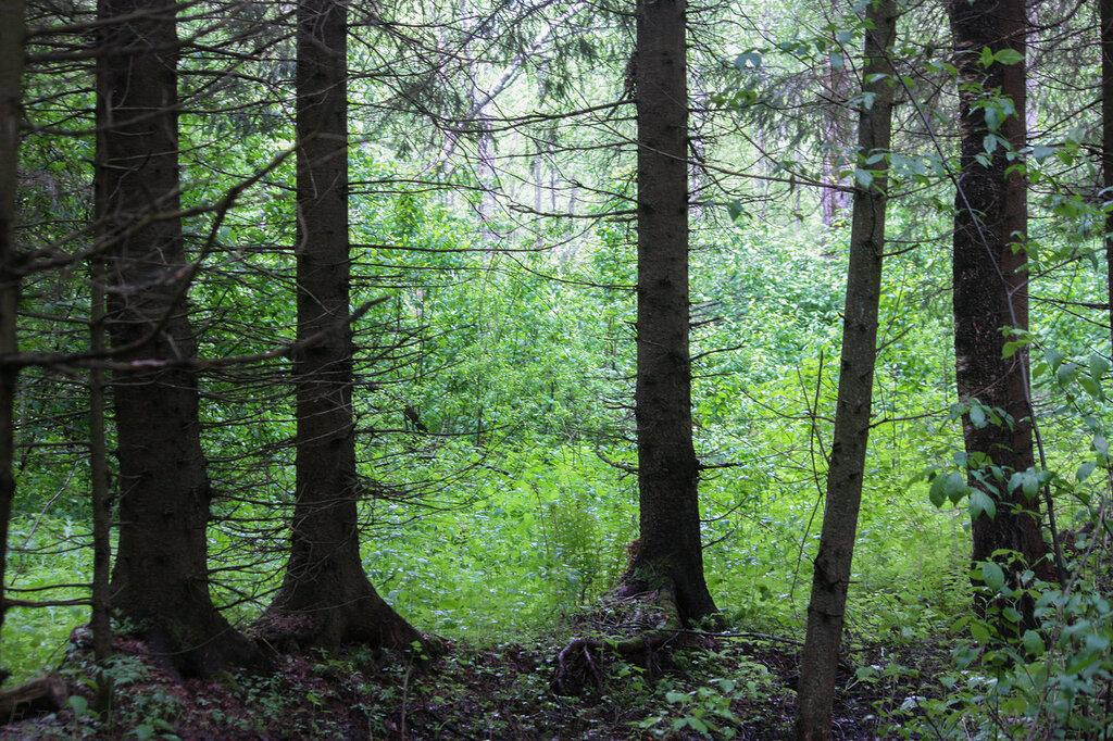 Дмитров лес-2.jpg